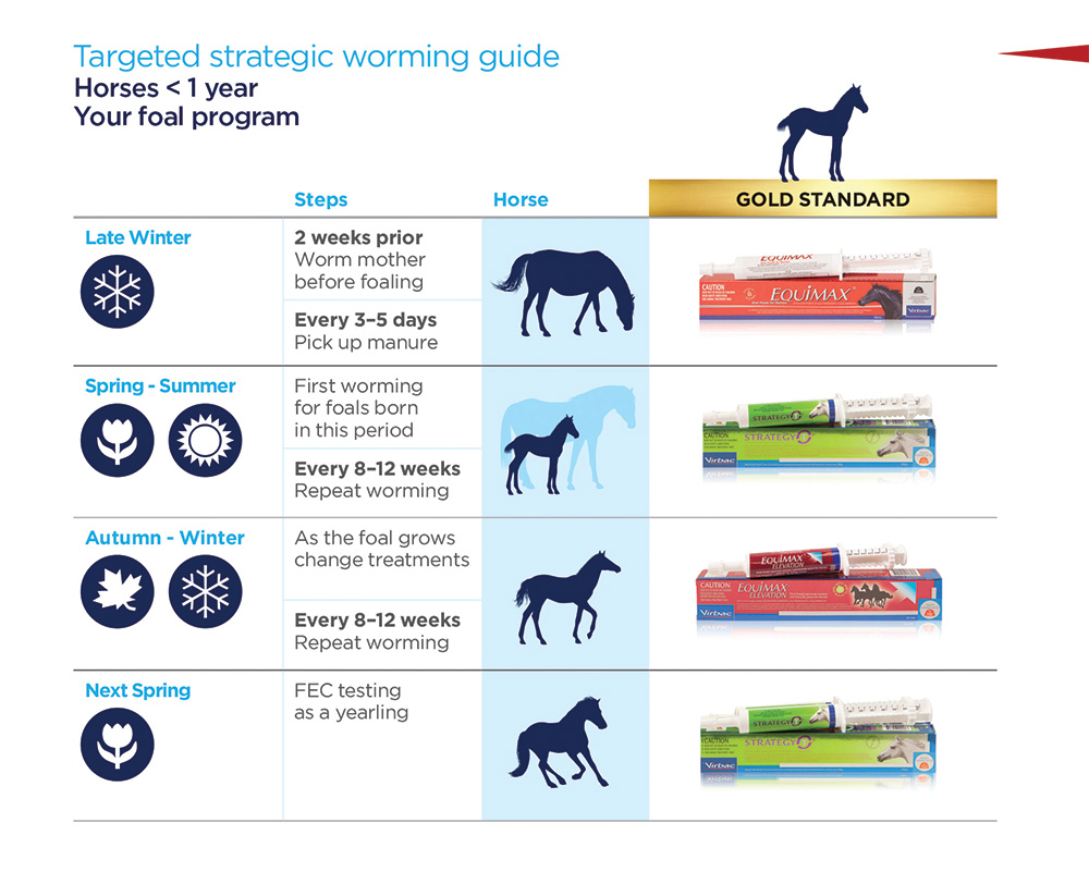 Foal Strategic Worming Guide