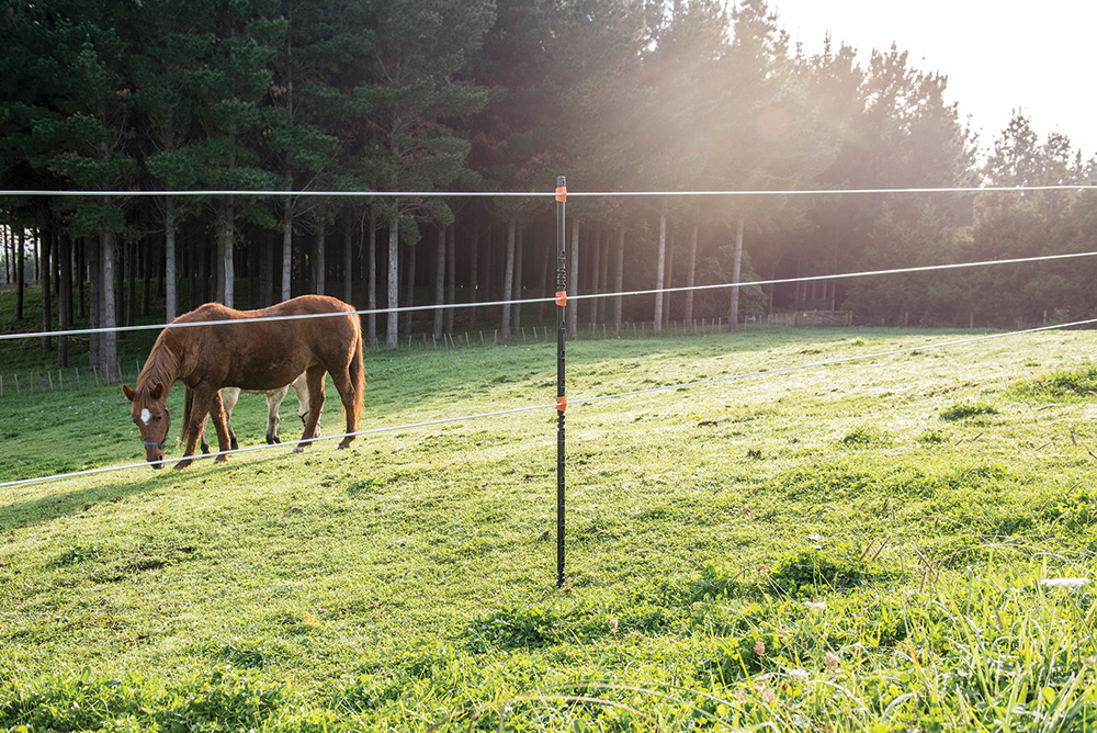Horse Near Insulated Post Fence