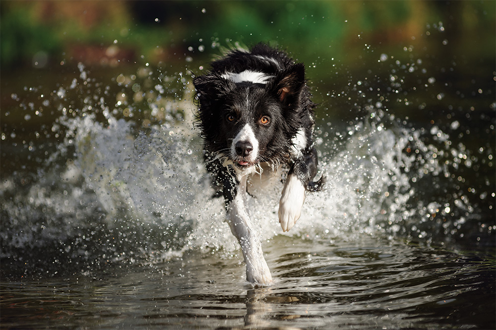 Welcome to the Farm - Dog running through water